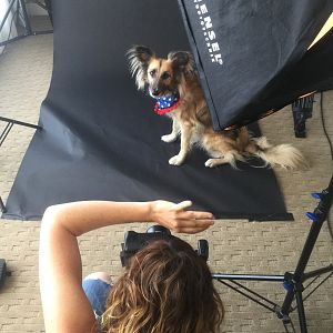 tanya king pet photographer