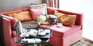 Loden Hotel Dog Friendly