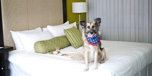 Opus Hotel Pampered Pooch